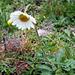 Eine weitere Blume…