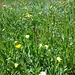 Saftige Frühlingswiese