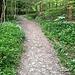 Der breite Weg, der direkt zum Rossweidli hochführt und dessen Bewirtschaftung (einmaliges Mähen des Grases pro Jahr) dient, überqueren wir und folgen unserem Trampelpfad.