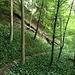 Kurz nach der Wegüberquerung stossen wir auf den Anfang der markanten Rippe. Der Pfad, dem wir bisher gefolgt sind und den wir jetzt verlassen, führt in einem Bogen rechts darum herum (auf dem Bild gut sichtbar). Würden wir dem Pfad weiter folgen, kämen wir direkt zur Ruine Friesenburg.