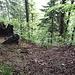 Hier bei diesem Baumstrunk beginnt der Trampelpfad: schräg rechts (Richtungsangaben in Gehrichtung) hinunter.