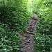 Aufstiegsvariante via Goldbrunnweidli (auf meiner Karte gestrichelt): Man umrundet den unteren Rippenanfang, geht gut 40 Schritte weiter und zweigt dann links ab: auf dem Bild genau dort, wo der Trampelpfad im Gebüsch verschwindet.