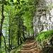"""Schöner Bergweg zur Alp Alpeel nun schon auf ca. 1200 m. Ohne das schützende Blätterdach wäre man hier von Anbeginn der Morgensonne """"ausgeliefert""""..."""