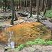 Sirný pramen (Schwefelquelle), kein Schwefel sondern Algen