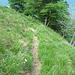 Nell'erba il sentierino è di più facile individuazione.