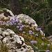 Kugelblumenwäldchen
