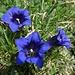 ... dann frontal: herrlich, diese edlen Blumen!