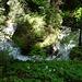wildromantischer Abschnitt des Ruisseau de Motélon