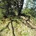 p. 1398 (hauptgipfel des haupt (auch hier sollten die bäume weg))
