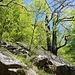 Rapporto: <br />In capo alla quale comincia il bosco di faggio della laura sacra di fondo il Terraccio <br /><br />Am Ende der Treppe beginnt der Buchenwald der unteren 'laura sacra' von Terraccio<br />