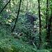 Wie so oft im Tessin: 50 Meter hinter dem letzten Haus einer Stadt beginnt der Dschungel und man ist auf einen Schlag für viele Stunden ganz alleine.
