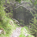 Aufi geht ... hinein  in den Nebelwald ... Abzweig zum Bocksberg.