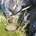 Nollenbrünneli - Das Wasser kommt direkt aus einer Quelle