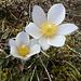 der Frühling kommt auch hier oben an