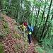Aufstieg über einen Jägerpfad - kartiert aber nicht markiert. nach der Abzweigung auf Foto 3 geht man bis zu einem Hochsitz weiter und dort links auf den Jägerpfad.<br /><br />Stöcke waren hier hilfreich