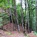 Hier kommt man über den schönen Jägerpfad auf die Hochfläche rauf