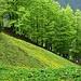 Frühlingswald im Abstieg von der Bogartenlücke nach Wasserauen