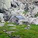 Randinascia - Alphütte mit neuem Dach