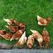 """neugierige Hühner - von oben """"überrascht"""""""