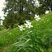 Am Gipfelhang des kleinen Vanil blanc