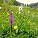 Blumenkombi am Fuss des Moléson
