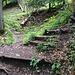 Ist man zwischenzeitlich dem Denzlerweg gefolgt, gilt es an der abgebildeten Stelle, auf den Linderweg (ohne Stufen) zu wechseln, der links weggeht. Hinten im Bild ist die Rippe sichtbar, die wir für den Weiteraufstieg benützen.