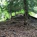 Aufstieg auf dem Rippenkamm ohne Trampelpfadspuren. Gelegentlich sind Wildwechsel zu erkennen (Rehe).