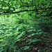 Gegen oben hin wird der Wald lichter.