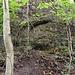 Mitten im Wald die Gipfelfelsen: Von oben hört man schon das Stimmengewirr der Touristinnen und Touristen, die sich auf der Uto-Kulm-Aussichtsplattform befinden.
