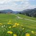 Blick nach NW zur Juget Alpe vom Köpfle aus