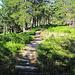 der Weg durch das Moor, am besten neben den Holzstämmen, die sind nämlich recht rutschig