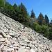Brevi pietraie da attraversare, senza alcuna difficoltà, nel lungo traverso verso l'Alpe di Neggia