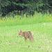 Der alte Fuchs.