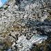 Auf dem Abstiegsweg in Richtung Bodenschneidhaus - hier gibt es tatsächlich noch Altschnee