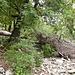 Totholz auf dem Pfad.