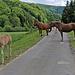 Wanderer und Pferde verstehen sich gut