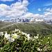 Von  hier  eine Stunde  zur Passo  Ra  Valles(2000m),  reine Genuß in Nachmittagsonne...