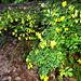 Farbtupfer im Wald