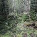 Im Abstieg vom Schlesierhaus (poln. Dom Śląski) via Seifengrube (poln. Biały Jar) in Richtung Krummhübel (poln. Karpacz) - Der Weg führt durch Wald, derzeit mit zahlreichen feuchten Stellen.