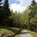 """Unterwegs von Krummhübel (poln. Karpacz, Rozdroże Łomnickie) zur Melzergrundbaude (poln. Schronisko PTTK """"Nad Łomniczką"""") - Rückblick. Immer noch geht's auf breitem Weg durch den Wald."""