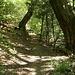 Sentiero nel bosco in territorio elvetico