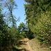 Sonnendurchflutete Wegpartie unweit der Landesgrenze im Bois Moront.