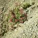 Oleanderbusch - er zeigt zuverlässig an, wo es etwas weniger trocken ist und vielleicht sogar Wasser gefunden werden kann.