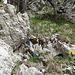 Das blaue Seil (in der Bildmitte) hängt rechts oben im Gelände und zeigt die Richtung aufs Balmfluechöpfli...