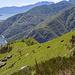 Die Nera Verzasca-Ziegen haben eine schöne Aussicht aus den steilen Hängen oberhalb der Alpe Odro :-)
