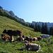 Schweizer Stilleben