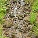 Vom Eise befreit sind Fluss und Bäche...☺