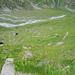 Im Zickzack geht der Weg gleichmässig steigend über schöne Blumenwiesen zum Col des Avouillons