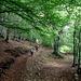 Il bosco dopo  Ariale.