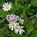 kleine Blumenfreude
